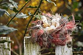 Birds' eggs and lamb ornament in delicate Easter nest of spotted feathers on picket fence