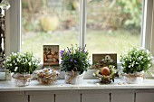 Eggs in nests and white and blue flowering potted plants as Easter arrangement on window sill