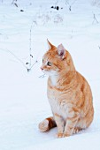 Cat sitting in snowy garden