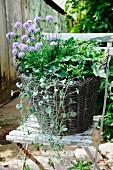 Grey wicker basket planted with autumnal arrangement on weathered garden chair