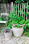 Garden arrangement of miniature pond in old terracotta pot & autumn plants in zinc bucket