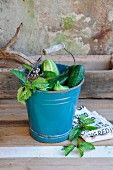 Freshly harvested cucumbers & herbs in blue enamel bucket