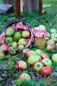 Geerntete Äpfel und Birnen mit rot-weiß geschmücktem Einmachglas auf Wiese dekoriert