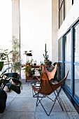 Leather butterfly chairs and tropical plants on concrete balcony