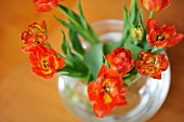 Open orange tulips in round glass vase seen from above