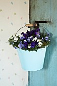 Violas in pale blue vintage metal bucket hanging on door handle