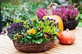 Wicker basket planted with ornamental cabbage and violas next to pumpkins on wooden table