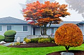 Trees in autumn colours in front of house