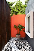 Narrow courtyard of Mexican house with black and white, trencadis tiled floor, wall painted terracotta and window accentuated by white frame