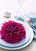 Purple dahlia flower on white plate in vintage setting with pale blue linen napkin and cutlery