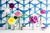 Arrangement of various vases containing single dahlia flowers against wall with printed blue lattice structure