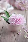 Pink peony and leaves in white bowl