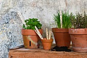 Potted herbs with labels made from disposable wooden cutlery