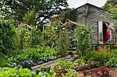 Beds of vegetables and flowers in garden; woman standing in open door of simple wooden house in background