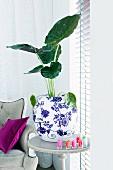 Alocasia wentii im Blumentopf auf Beistelltisch zwischen Sofa und Fenster