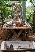 Vintage utensils in rustic wooden trough in front of various potted plants on wooden table in greenhouse