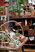 Various potted plants on wooden surface