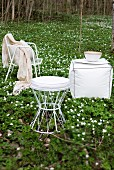 White wire chairs and stool in woodland clearing carpeted in wood anemones