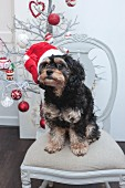 Small dog wearing Santa hat sitting on chair in front of Christmas tree
