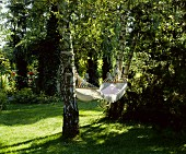 Hammock strung between birch trees in sunny garden