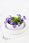 Purple spring flowers in ceramic pot