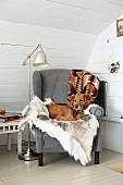Dog on animal-skin blanket on comfortable grey armchair next to retro standard lamp in corner against white wooden wall