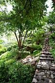 Steep steps in woodland-style garden