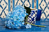 Pale blue hydrangeas in front of white and blue patterned beaker on blue-painted surface