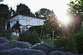 View of villa over lavender bushes in garden in Mediterranean surroundings