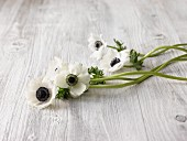 White anemones on wooden surface