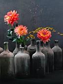 Dahlias in dusty bottles