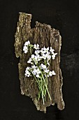 White flowers on piece of bark