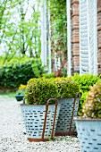 Round box trees in metal pots on a gravel area in front of a French country house