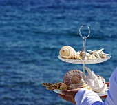 Seashells on cake stand held in hands in front of ocean backdrop