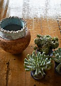 Various potted succulents next to ceramic pot on floor