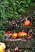 Pumpkins on wooden steps in autumnal garden