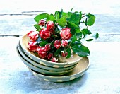 Red and white roses in dish