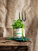 Unusual gift idea - gardening utensils and plant wrapped as gift