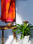 Bromeliad in pale pot next to toiletries on rustic wooden stool below towel hung up against wall