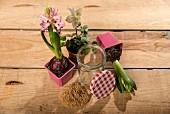 Potted hyacinths and hellebore, bracket fungus and screw-top jar