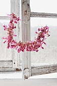 Dried Christmas cactus flowers threaded on wire in front of old wooden window