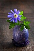 Blue anemone and leaves in blue-painted, blown duck