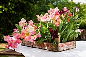 Many parrot tulips in wooden crate on table in garden
