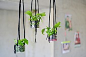 Tin cans hand-decorated with graphic patterns and neon patterns used as hanging planters for small ferns