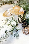 Ornamental toadstools and snow on larch twigs