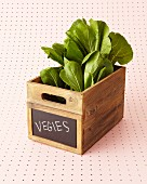 Lettuce in wooden crate with chalk sign on front standing on pink, perforated metal plate
