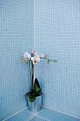 weiße Orchidee im Topf in Badezimmerecke mit hellblauen Mosaikfliesen