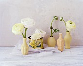 White ranunculus in cream vases