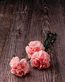 Three pink carnations on wooden surface