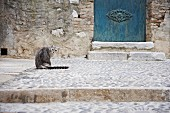 Cat sitting on platform paved with pebbles in front of partially visible outside door with steps in stone facade